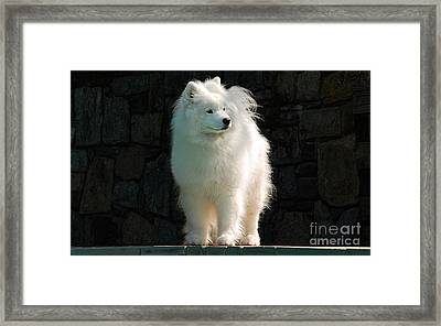 Intent Framed Print by Lois Bryan