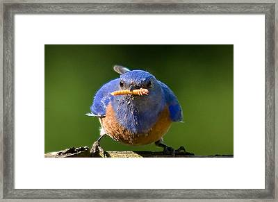Interupted Framed Print by Jean Noren