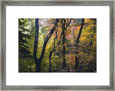 Intimate Forest Framed Print by Peter Coskun
