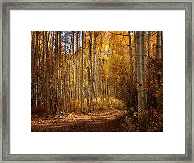 Into The Color Framed Print by Steven Reed