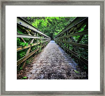 Into The Jungle  Framed Print by Edward Fielding