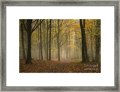 Into The Mist Framed Print by Anne Gilbert