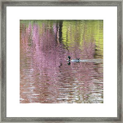 Into The Pink Framed Print by Karin Ubeleis-Jones