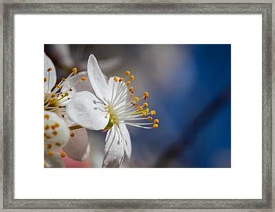 Into The Sun Framed Print by Andreas Levi