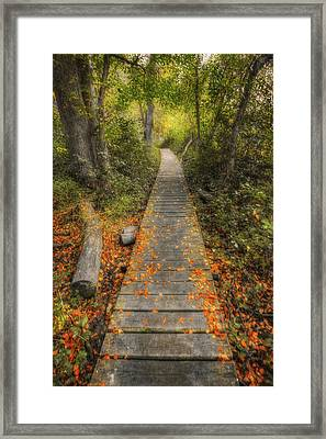 Into The Woods - Retzer Nature Center - Waukesha Wisconsin Framed Print by The  Vault - Jennifer Rondinelli Reilly