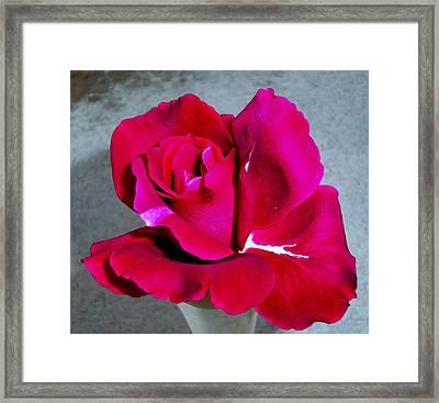 Intrique Rose 2 Framed Print by Ron Kandt