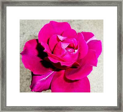 Intrique Rose 4 Framed Print by Ron Kandt