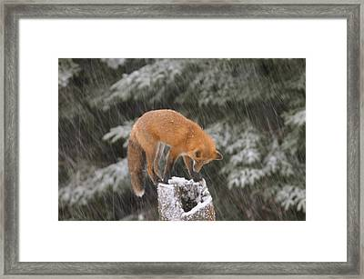 Investigating That Stump Framed Print by Sandra Updyke
