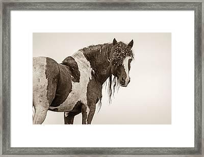 Invincible Framed Print by Sandy Sisti