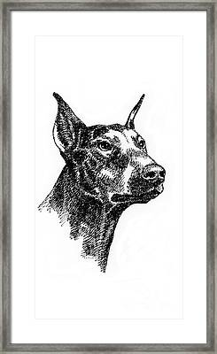 iPhone-Case-Doberman Framed Print by Gordon Punt