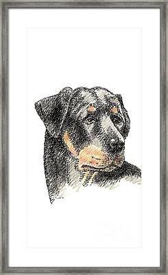 iPhone-Case-Rottweiler Framed Print by Gordon Punt