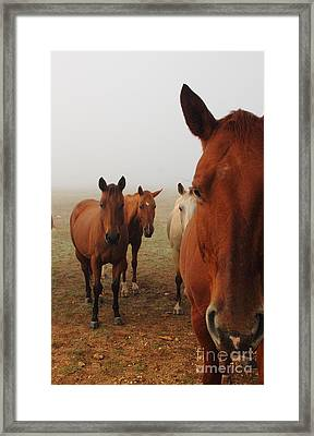 The Gauntlet - Iphone Framed Print by Robert Frederick
