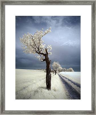 Irenka Framed Print by Piotr Krol (bax)