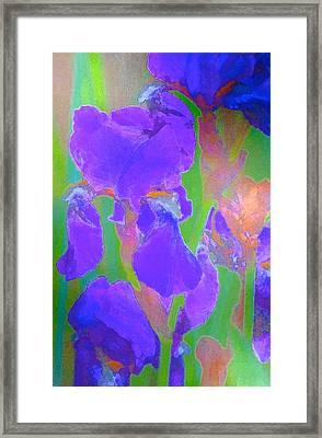 Iris 59 Framed Print by Pamela Cooper