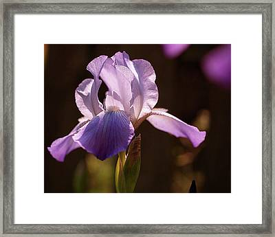 Iris Aglow Framed Print by Rona Black
