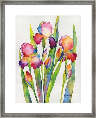 Iris Elegance Framed Print by Hailey E Herrera