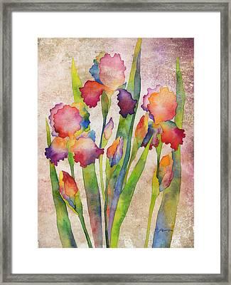 Iris Elegance On Pink Framed Print by Hailey E Herrera