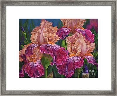 Iris Garden 2 Framed Print by Fiona Craig