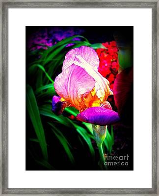 Iris Glow Framed Print by Janine Riley