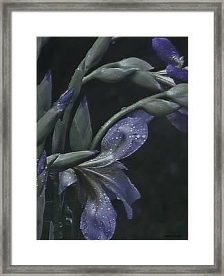 Iris Rain Framed Print by Barbara St Jean