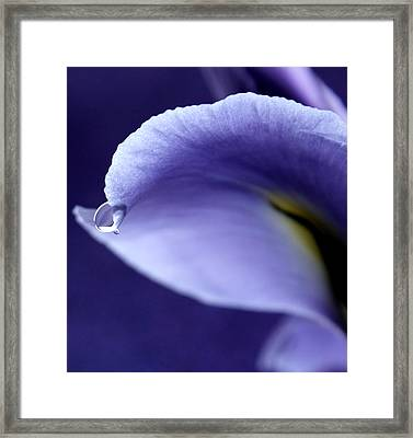 Iris Rain Framed Print by Krissy Katsimbras