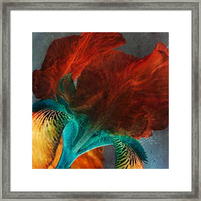 Iris Sonata Framed Print by Bonnie Bruno