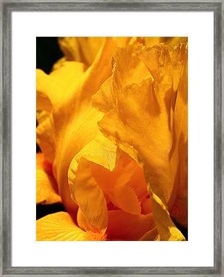 Iris Undulation Framed Print by Rona Black