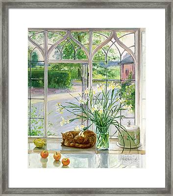 Irises And Sleeping Cat Framed Print by Timothy Easton