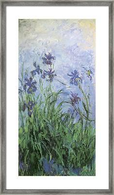 Irises Framed Print by Claude Monet