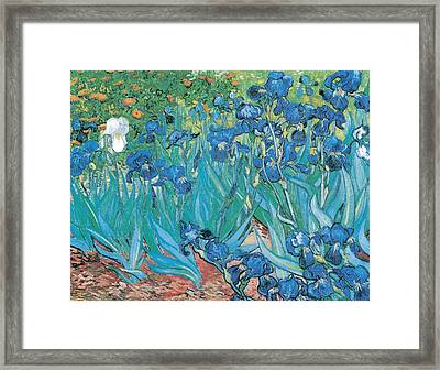 Irises Framed Print by Georgia Fowler