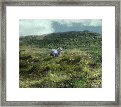 Irish Countryside Framed Print by Kandy Hurley