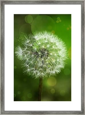 Irish Dandelion Framed Print by Bill Tiepelman