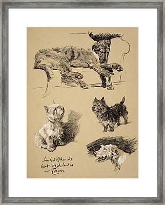Irish Wolfhound, West Highlander Framed Print by Cecil Charles Windsor Aldin