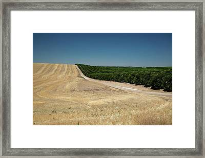 Irrigated Orchard Framed Print by Jim West