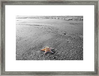 Island Star Framed Print by Betsy C Knapp