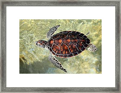 Island Turtle Framed Print by Carey Chen