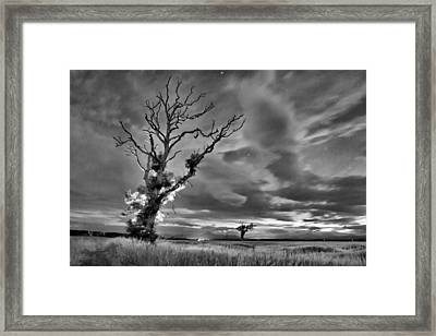 Isolated Tree Framed Print by Buster Brown