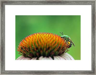 It Is A Hard Knock Life  Framed Print by Juergen Roth