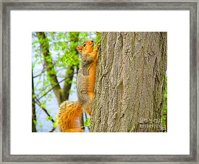 It Is Hard Work Getting To The Top Framed Print by Tina M Wenger