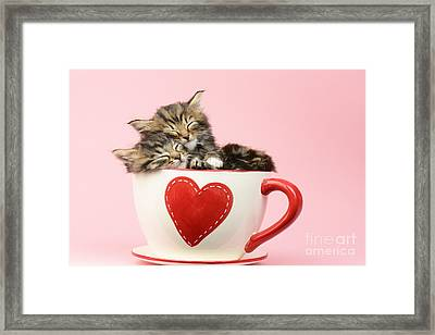 It Must Be Love Framed Print by Greg Cuddiford