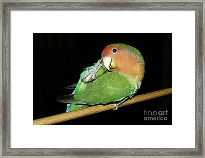 Itchy Pickle Framed Print by Terri Waters