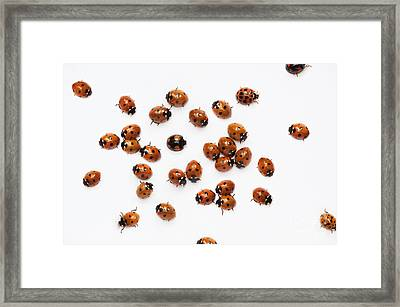 Its A Bug Thing Framed Print by Tim Gainey