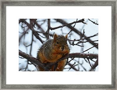 Its Cold Said The Squirrel Framed Print by Rae Ann  M Garrett