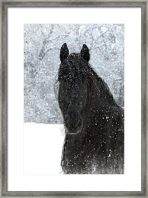 It's Friesian Out Here Framed Print by Fran J Scott