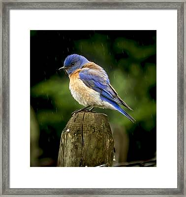 Its Wet Out Here Framed Print by Jean Noren