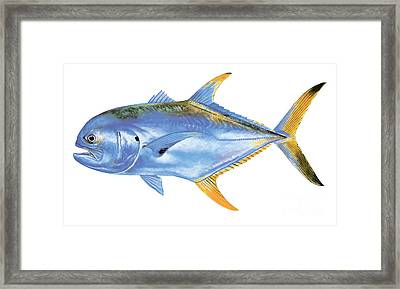 Jack Crevalle Framed Print by Carey Chen