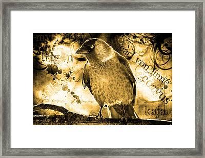 Jackdaw Framed Print by Toppart Sweden