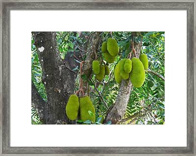 Jackfruit Framed Print by Anuj Nair