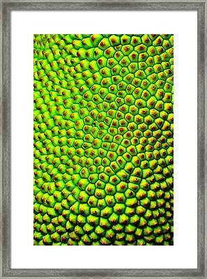 Jackfruit's Skin Framed Print by Silvie Gunawan