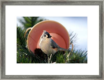 Jackpot Holiday Framed Print by Christina Rollo